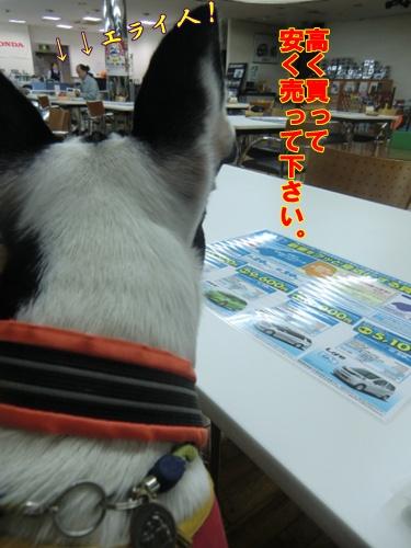 2011_1001_184319-CIMG6867.jpg