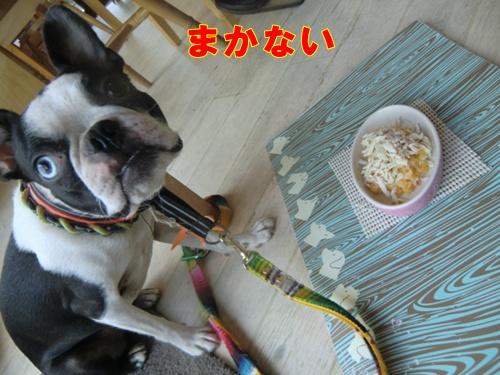 2011_1004_153329-CIMG6883.jpg