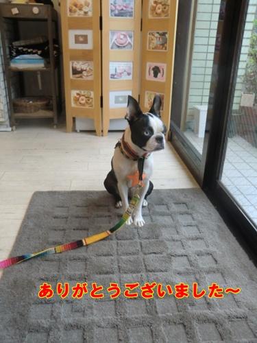 2011_1004_170124-CIMG6884.jpg