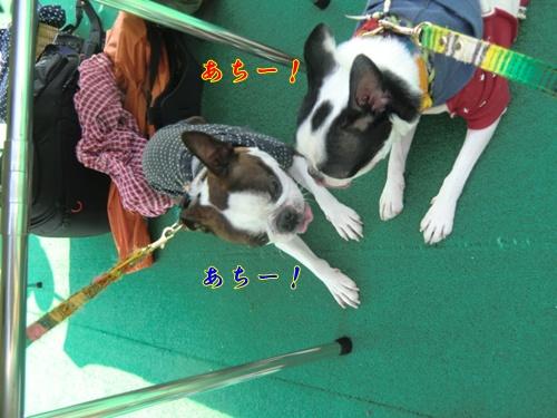 2011_1008_114952-CIMG6894.jpg