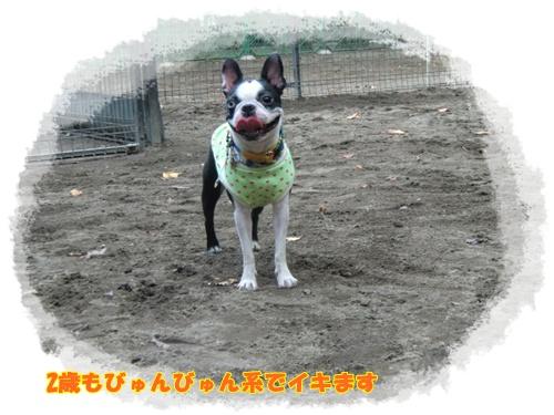 2011_1013_143434-CIMG7034.jpg