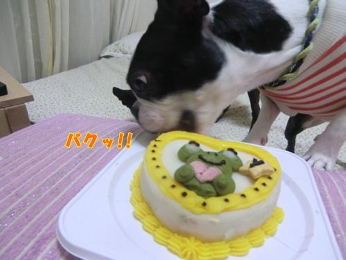 2011_1018_210559-CIMG7075.jpg