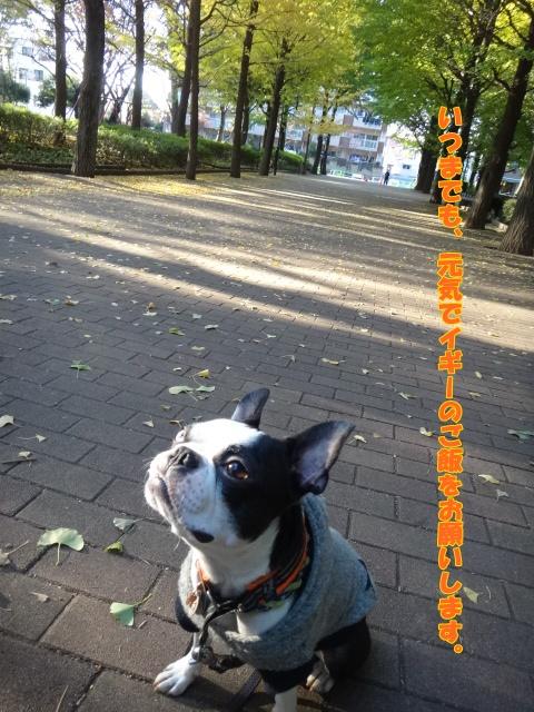 2011_1116_145407-DSC01819.jpg