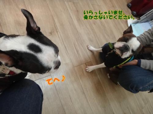 2011_1210_123422-DSC02138.jpg