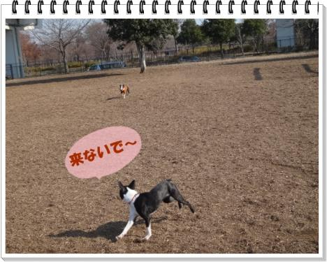 2012_0111_115148-DSC02421.jpg