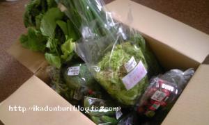 めっけもん市場のお野菜たち