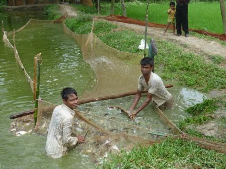 魚を採る男たち