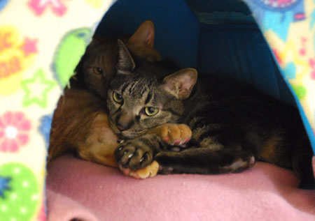 猫ハウスのジャンジャンとメンメ