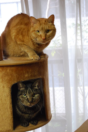 キャットタワーのメンメとジャンジャン