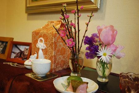 桃の花とミーちゃんの遺骨