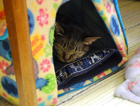 猫ハウスで寝るジャンジャン