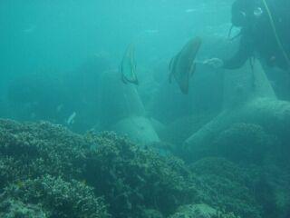 20111026クリマビーチつばめ魚