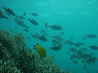 20111026クリマビーチ接待魚
