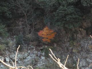 20111206廃線跡ハイク一本紅葉
