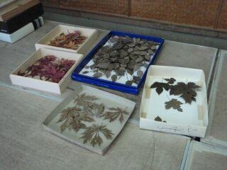 20121208但馬焼き陶芸教室枯葉