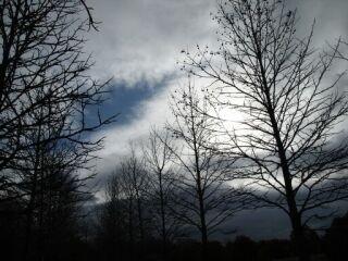 20120124三木山森林公園枯れ木