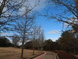 20120124三木山森林公園歩道