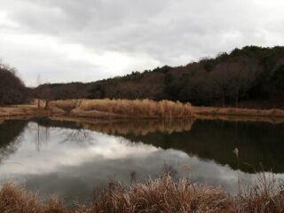 20120124三木山森林公園池面