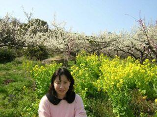 綾部山梅林白梅と菜の花直美