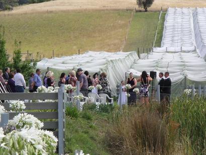 ワイナリー結婚式