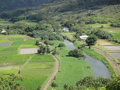 カウアイ島タロイモ畑2