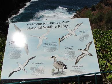 カウアイ島キラウエア灯台2