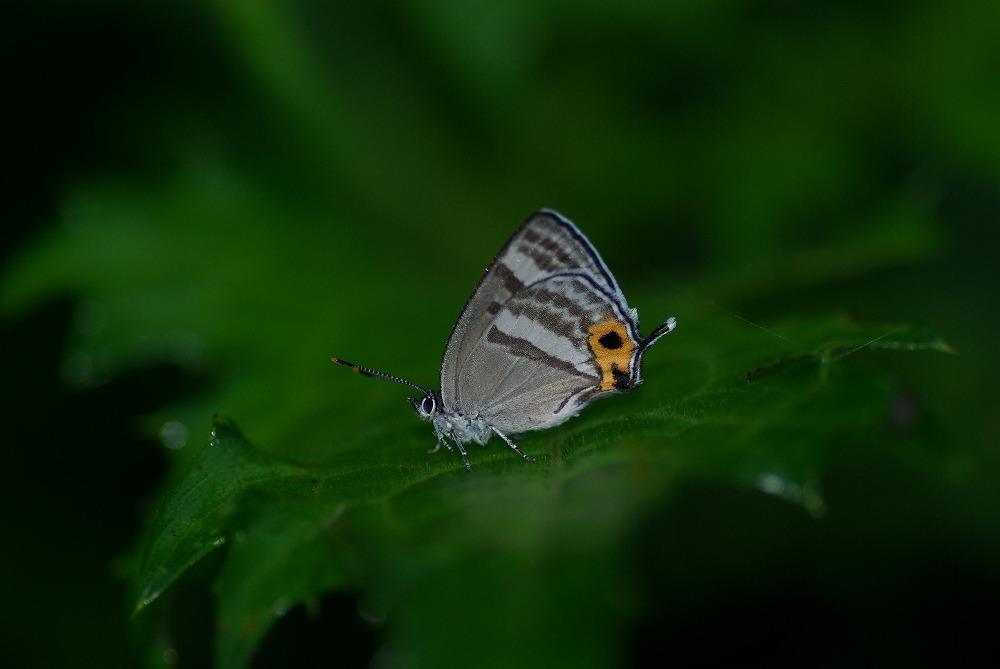 フジミドリ 2011.06.28 0520