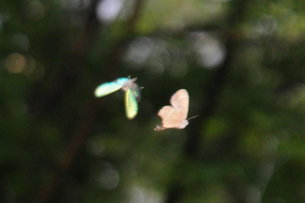 アイノミドリ 2011.07.05 0823