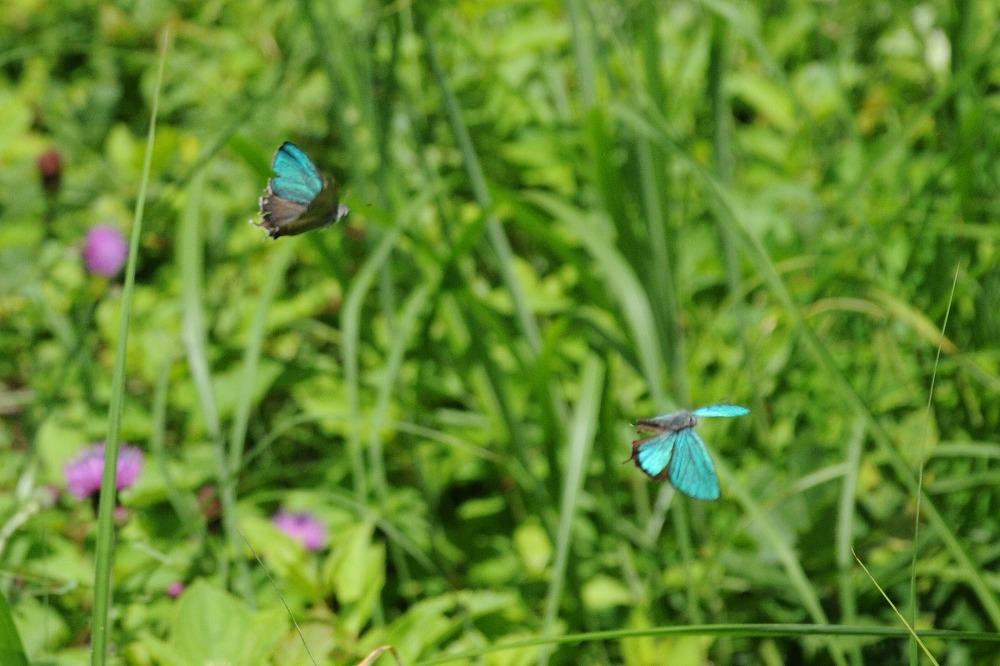 ジョウザンミドリ 2011.07.12 1015