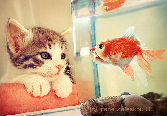 39_hello-fish-l.jpg