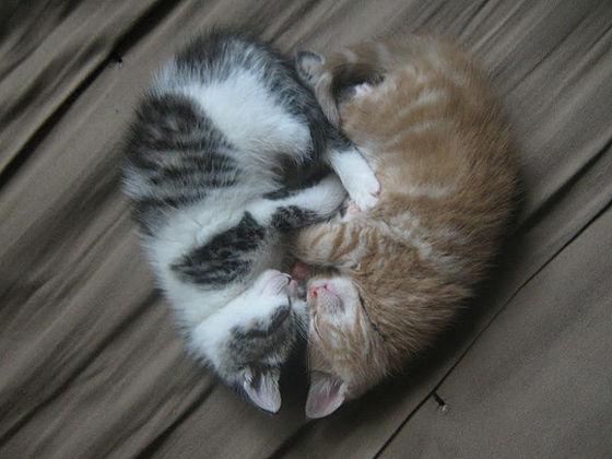 42_Amazing-Kittens-l.jpg