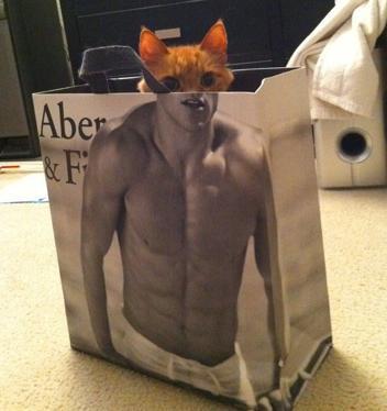 bag-cat13.jpg