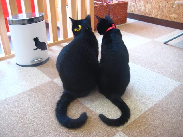 heart-cat02.jpg