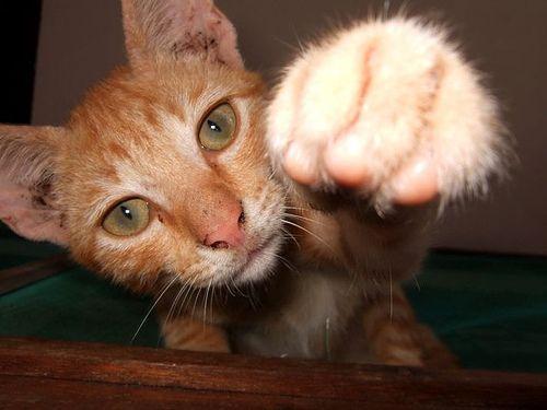 kung-fu-cat35.jpg