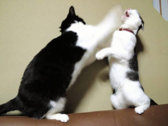 kung-fu-cat36.jpg