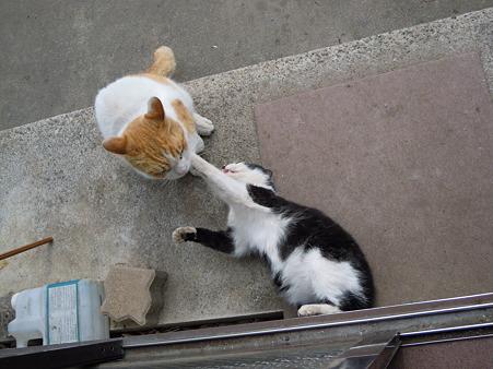 kung-fu-cat37.jpg
