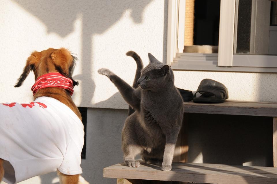 kung-fu-cat39.jpg