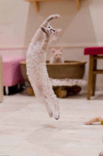kung-fu-cat52.jpg