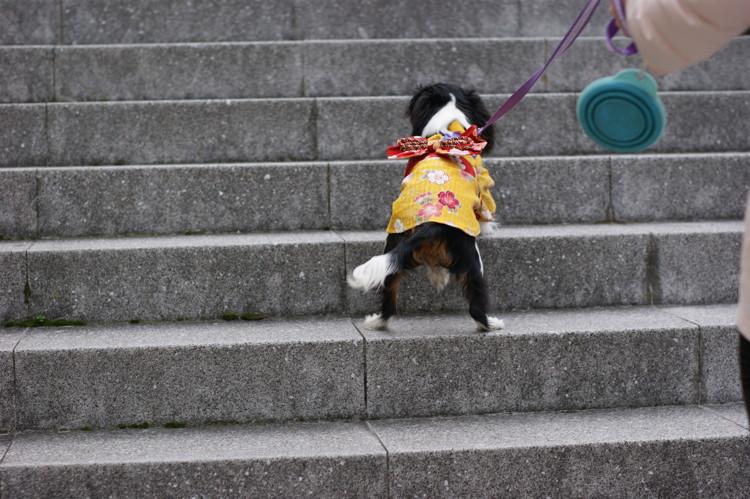 階段昇り中