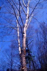 Nature1-015.jpg