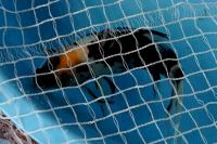 金魚日本一大会2012 (37)
