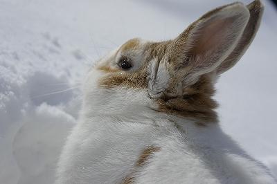 雪がいっぱいーー