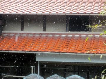 雪降ってました
