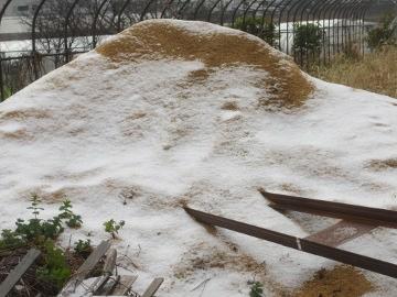 雪の被害10