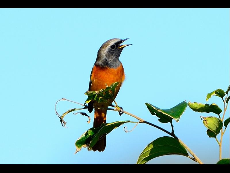 望地の小鳥たち