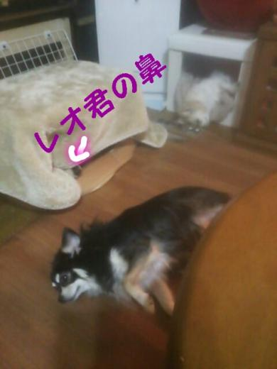 rakugaki_20141102100640408_convert_20141104185840.jpg