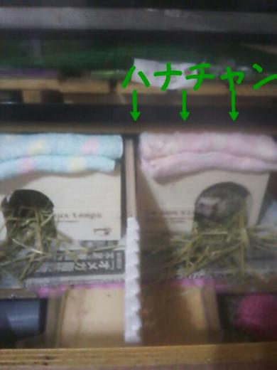 rakugaki_20141110110536578_convert_20141120155516.jpg