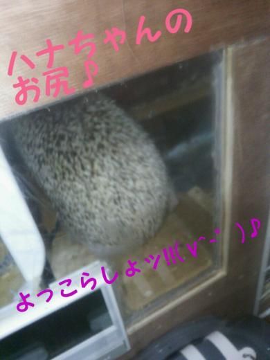rakugaki_20141201003207642+(1)_convert_20141203161921.jpg