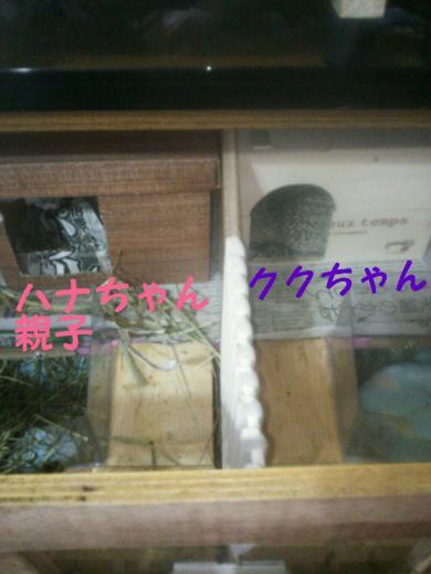rakugaki_20141204152337840_convert_20141204153358.jpg