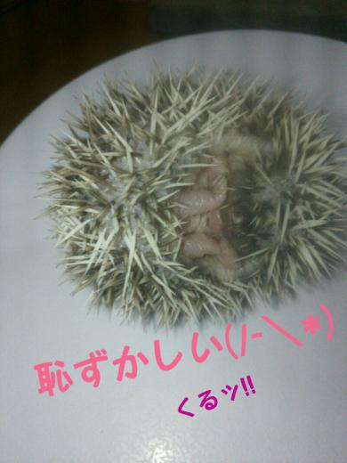 rakugaki_20141205125441876_convert_20141206152214.jpg
